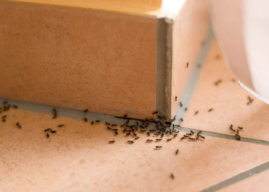 One Time Ant Control - Pest Control Solutions & Services - Tampa Bay, FL