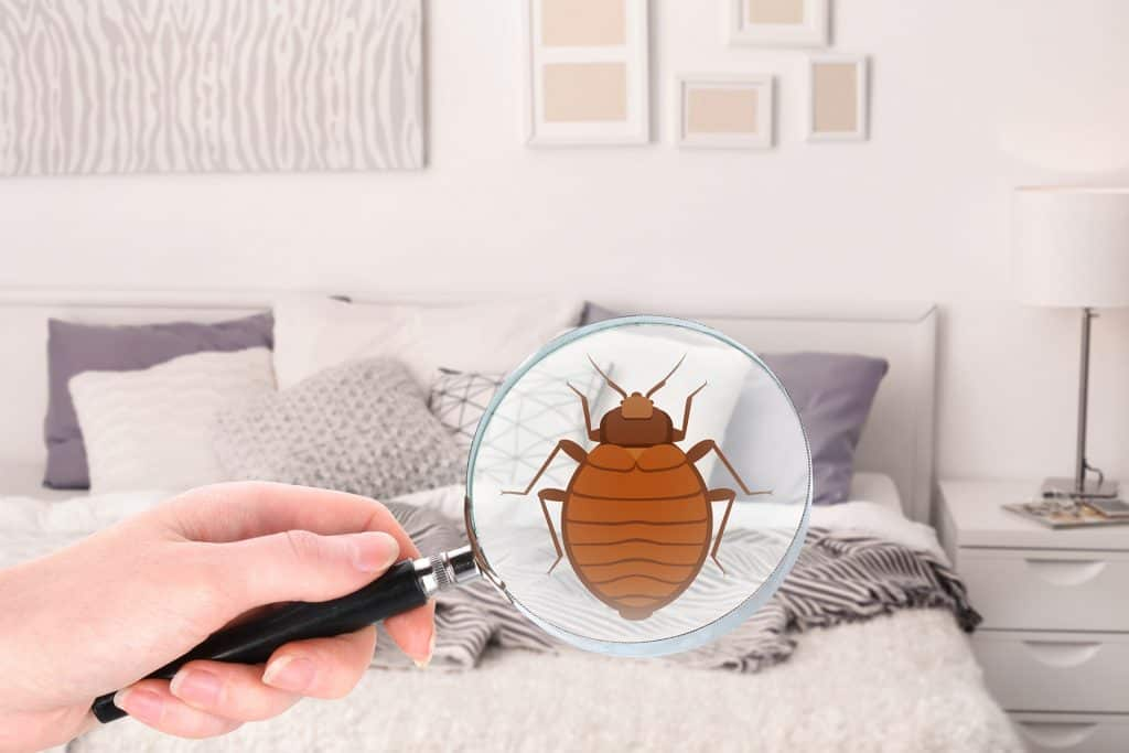 Bed Bug Service - Pest Control Solutions & Services - Tampa Bay, FL
