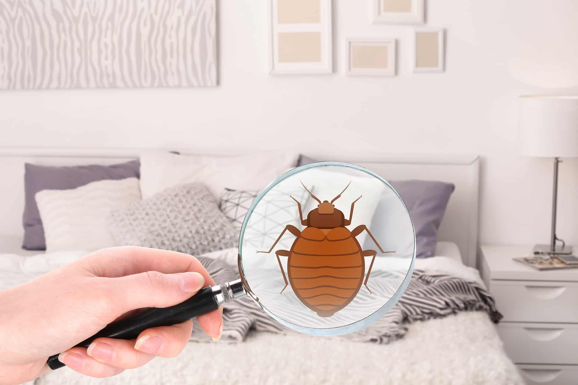 Bed Bug Control Clearwater Largo St Petersburg