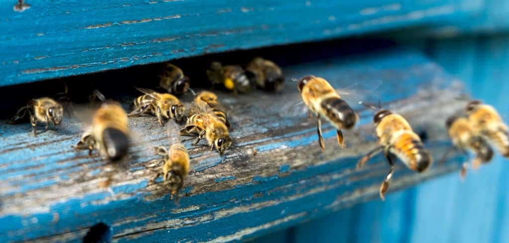 Bee Removal - Pest Control Solutions & Services - Tampa Bay, FL