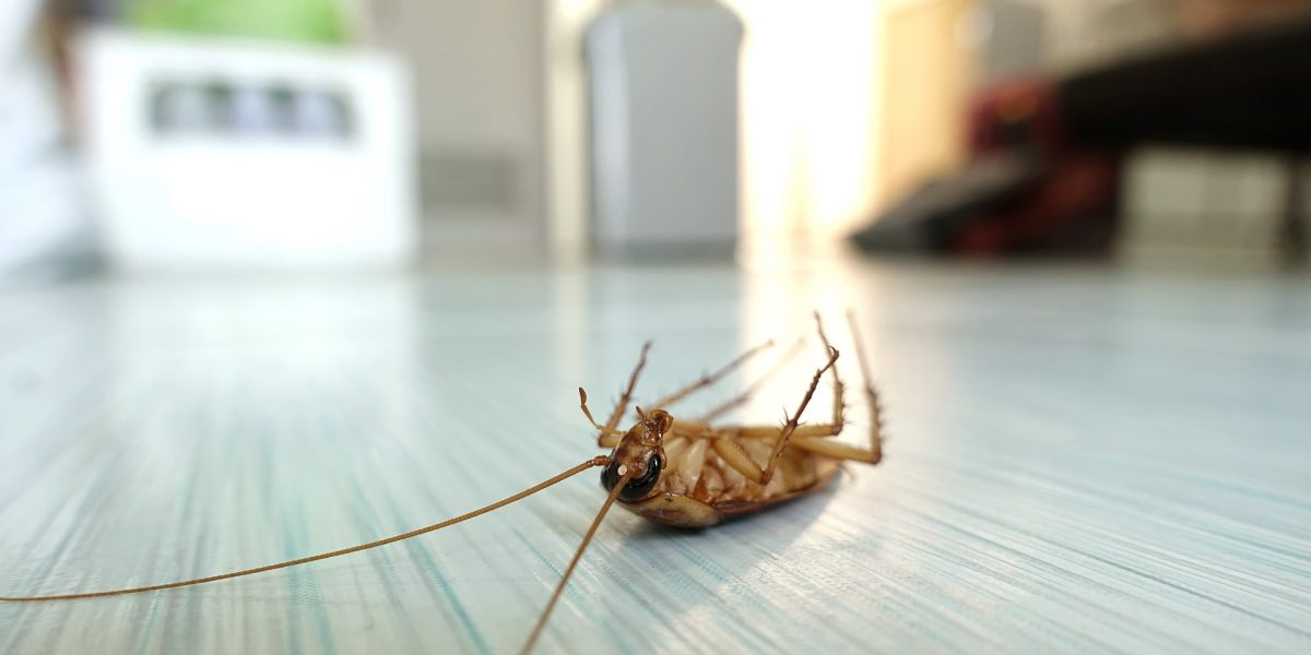 One Time Roach Service - Pest Control Solutions & Services - Tampa Bay