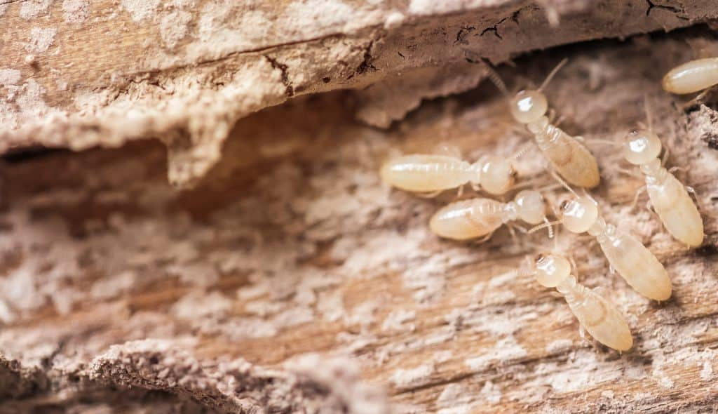 Subterranean Termite Services - Pest Control Solutions & Services - Tampa Bay, FL