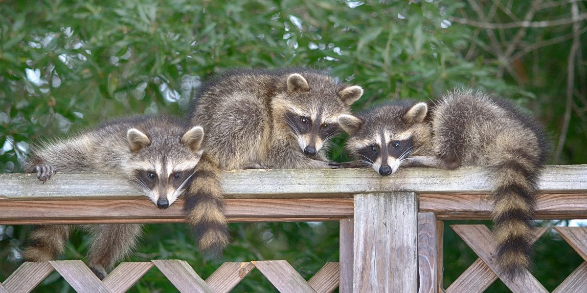 Wildlife Control - Pest Control Solutions & Services - Tampa Bay, FL